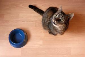 Кот сидит возле миски