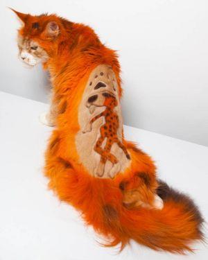 Крашенный оранжевый кот с рисунком гепарда на спинке сидит на столе
