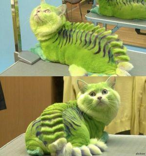 Окрашенный зеленый кот с ирокезом на спине и черными полосками лежит на кушетке