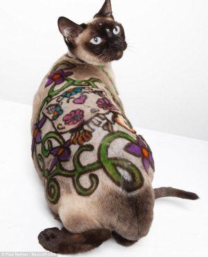 Сиамская кошка с цветным узором на спине и стразами стоит на фоне белой стены