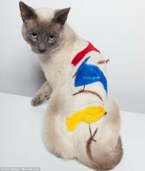 Сиамская кошка с цветными птицами на спине сидит на белом фоне
