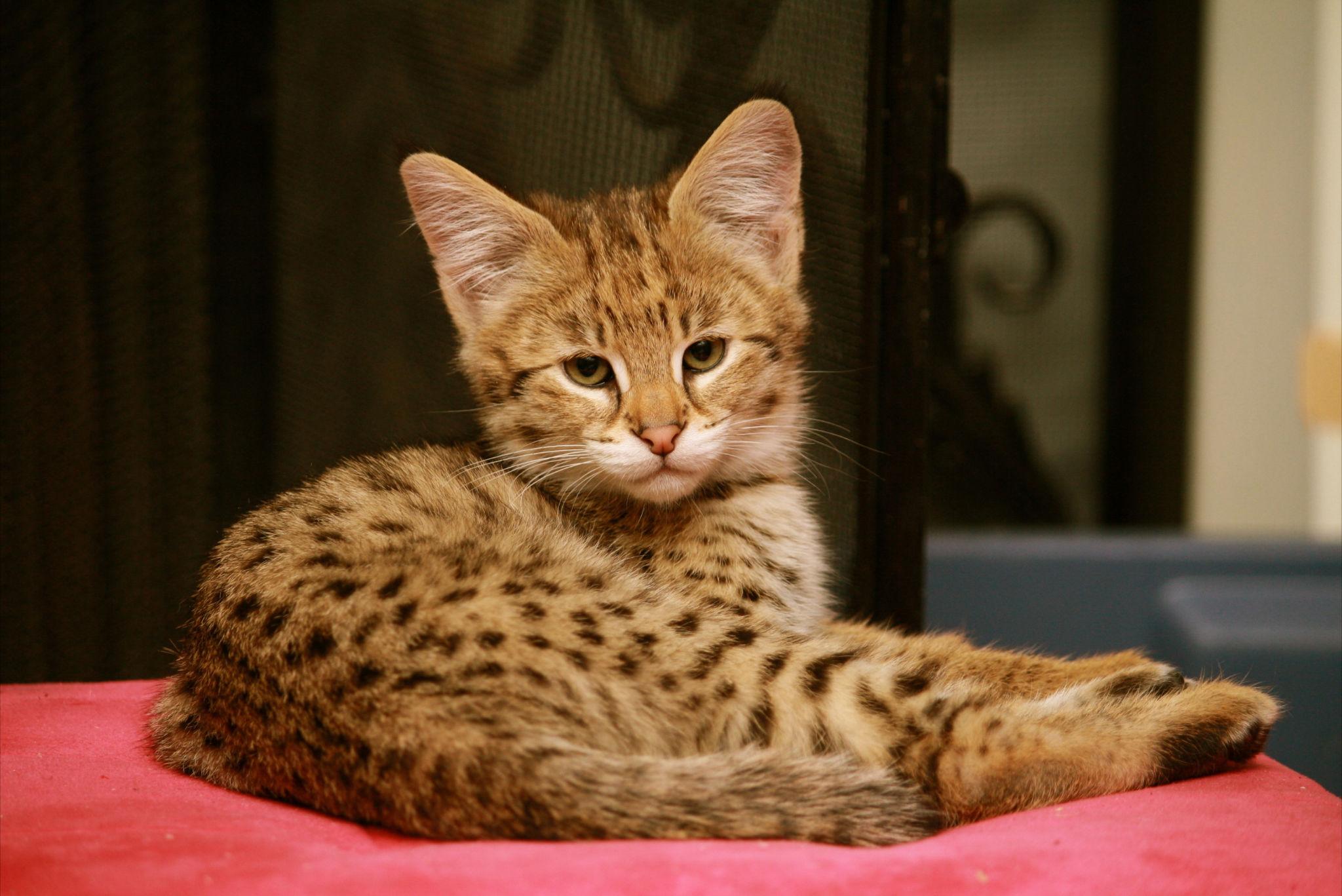 твой покажи фотографии кошек и сколько они стоят люмьер проходит выставка