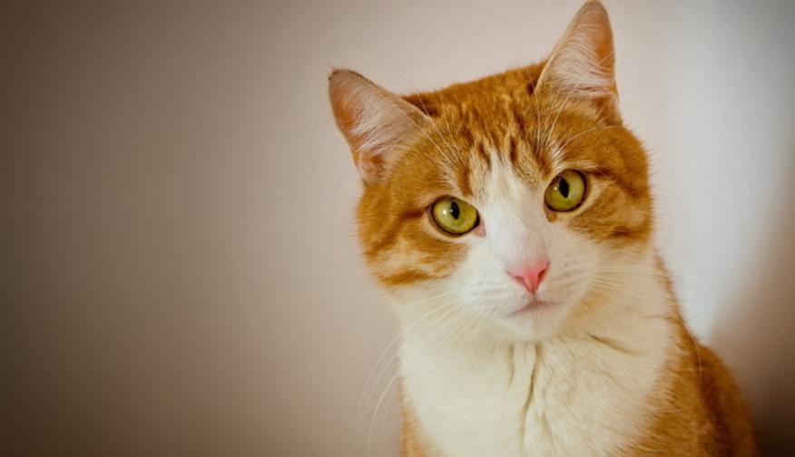 Понос у кота с хпн чем кормить