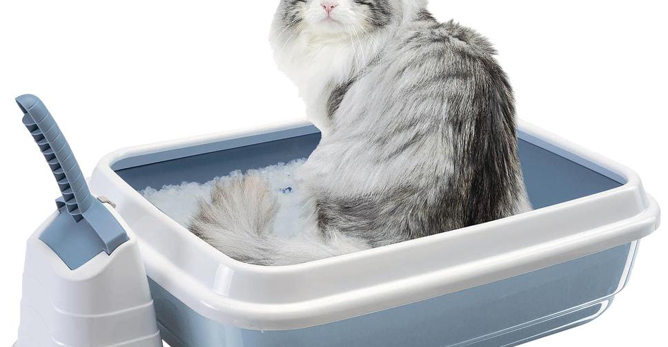 Почему кошки гадят где попало. Способы обработки мест, где гадит кошка Как сделать так чтобы кошка не гадила