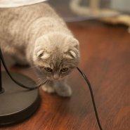 Как кота отучить грызть провода