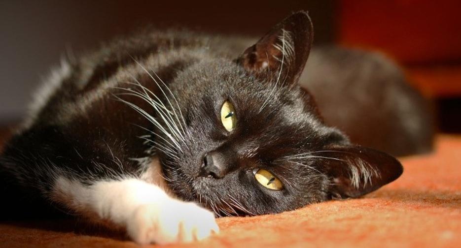 Как понять что у кошек и котов глисты: симптомы, как узнать