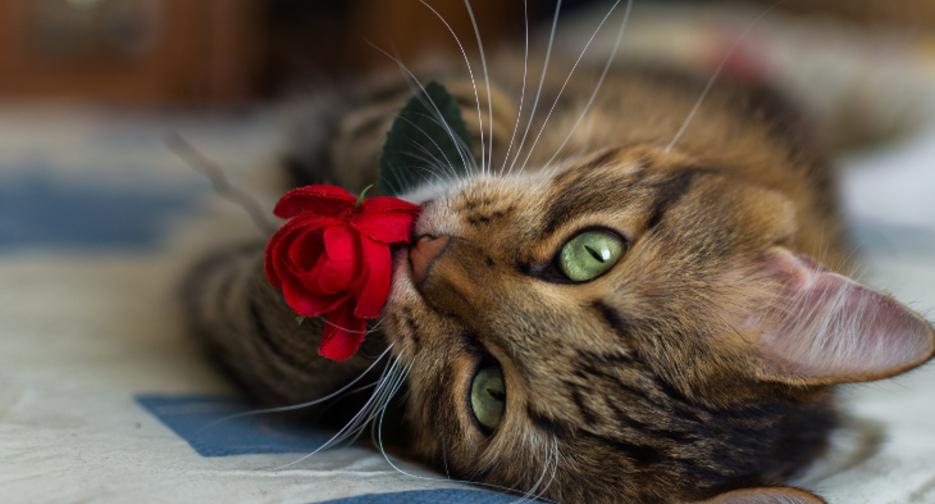 Чем отличается недорогой гипоаллергенный корм для кошек, может ли дешёвый корм быть без аллергенов?