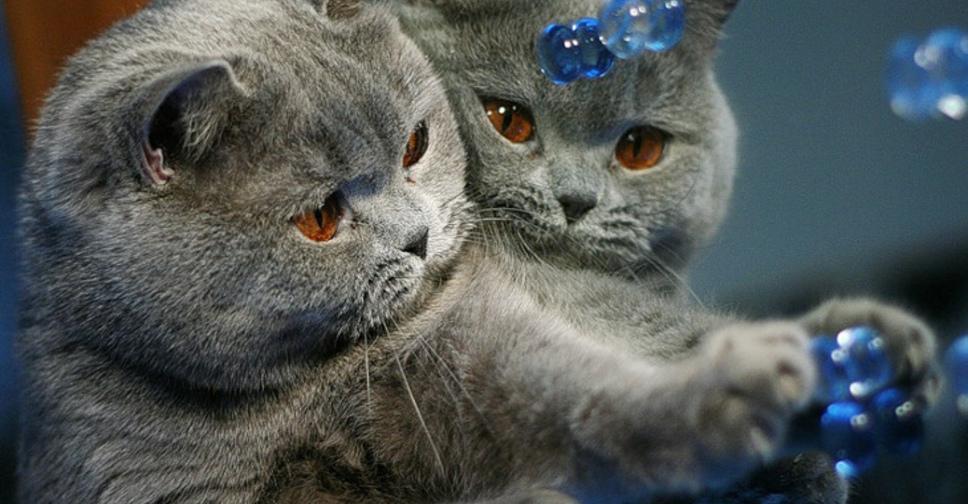Влажный корм для кошек гепатит thumbnail