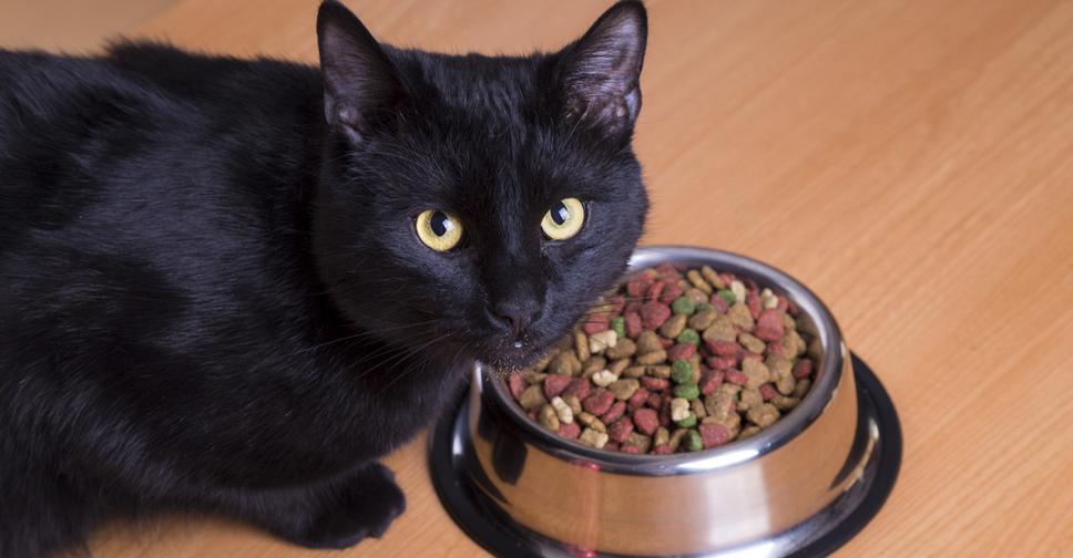 Рвет кошку и она ничего не ест: Как помочь кошке?Инструкция что делать, если кота тошнит Фото и Видео