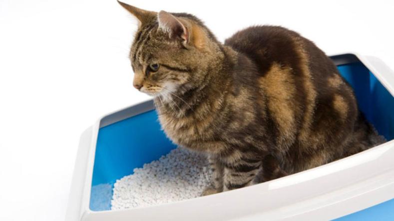Идиопатический цистит у кошек - 5 симптомов и лечение