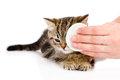 Стафилококк у кошек симптомы лечение