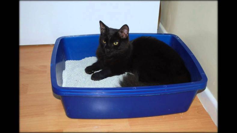 Как отучить кота гадить в неположенном месте народные средства