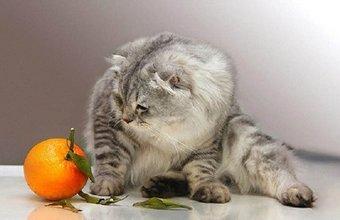 Что отпугивает кошек чтоб не гадили