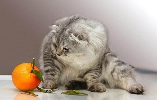 Какие запахи не любят кошки чтобы не гадили Неприятные запахи которые не любят кошки