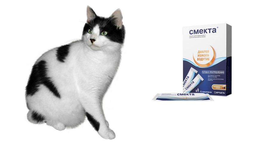 Как давать кошке смекту при поносе