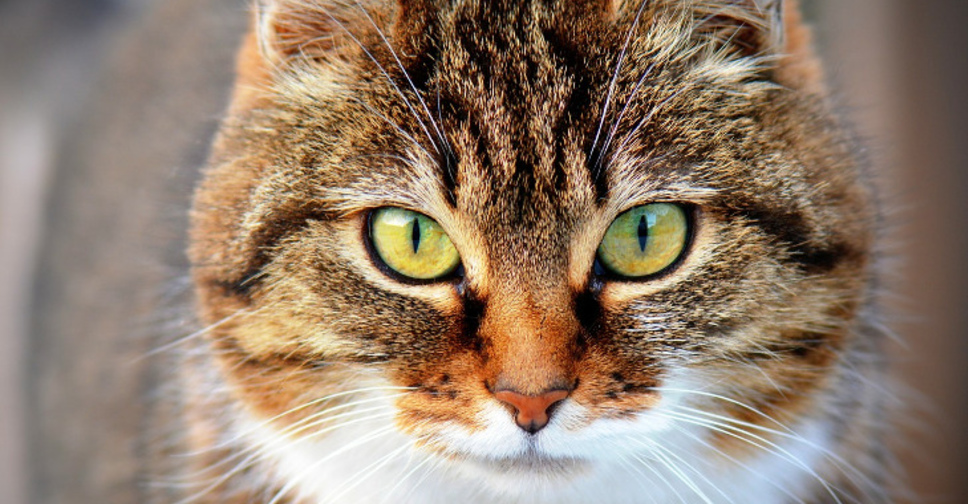 Что делать если у кота кровь в кале