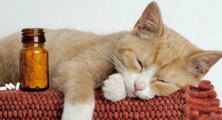 Какие коту можно давать антибиотики
