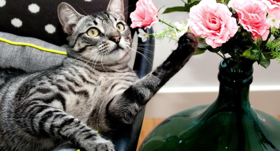 Панлейкопения у кошек: симптомы, лечение и опасность для человека