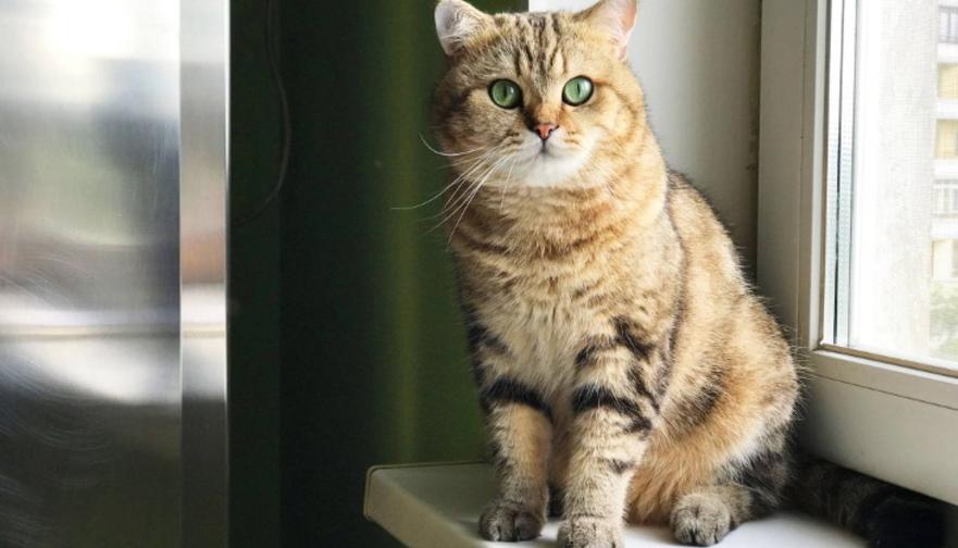 Кот кашляет и хрипит - как лечить в домашних условиях