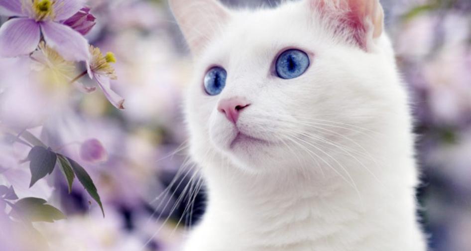 Почему кошку рвет желтой или белой жидкостью после еды