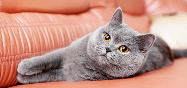 Что делать, если кот начинает чихать? Кот чихает: что делать и как диагностировать? Кошка постоянно чихает что делать.