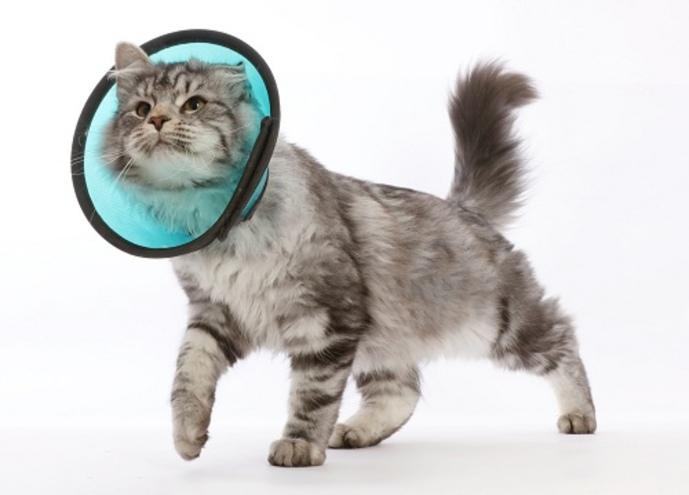Воротник для кота после кастрации какой выбрать как сделать своими руками