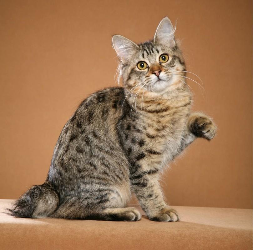 Картинки с кошками все породы