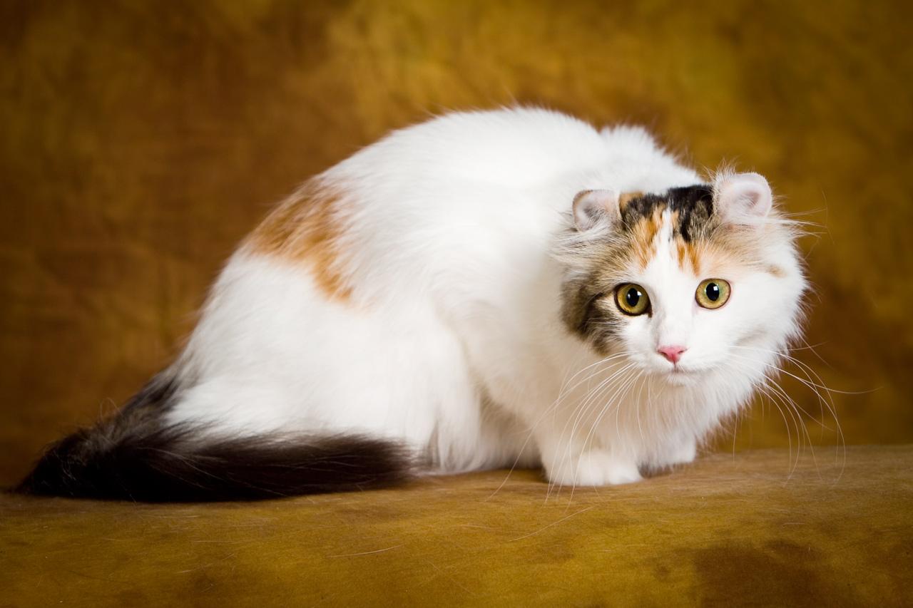 Картинки разных пород котиков