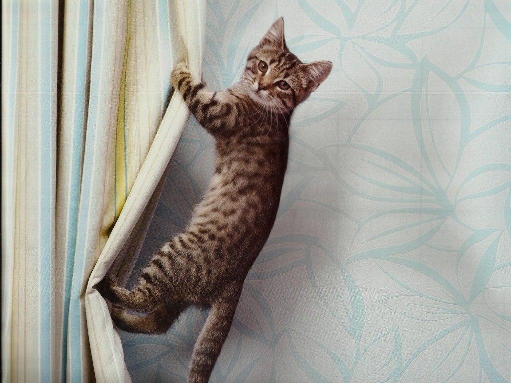 котенок висит картинки агентства ломают