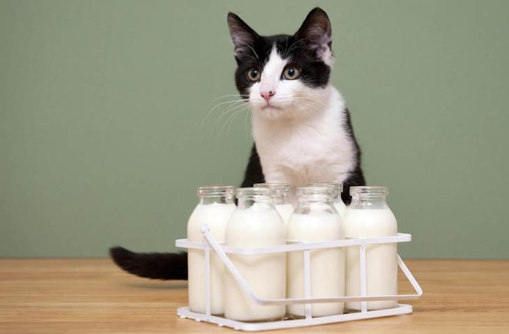 можно ли давать кошкам молоко