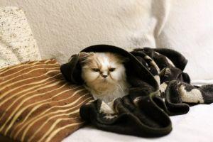 Слабость у кота