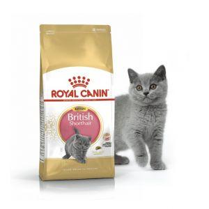 Корм Royal Canin для британских короткошерстных